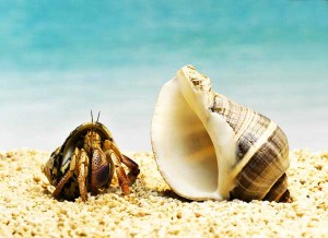 crab-and-shell