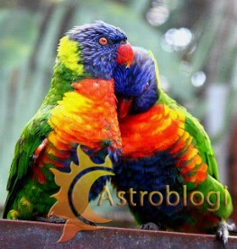 love-birds-all-images